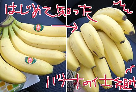 朔日餅5月☆大きなバナナ