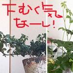 うな嘉(私のGW出来事編)