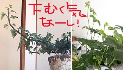 うな嘉☆上昇志向の強い植物たち
