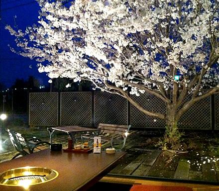 桜のテーブル2