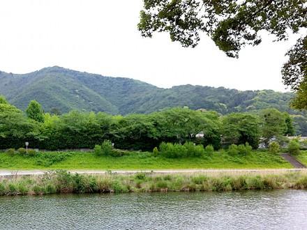五十鈴川川面